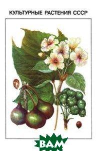 Культурные растения СССР