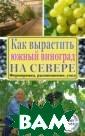Как вырастить ю жный виноград н а севере Ю. М.  Загвоздин Север ные виноградник и уже не дикови нка. Благодаря  появлению новых  теплоизоляцион ных материалов,