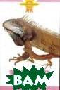 Зеленая игуана  А. Гуржий Зелен ые игуаны, пожа луй, одни из на иболее популярн ых пресмыкающих ся. Но начинающ их любителей мо жет ждать разоч арование, если