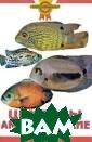 Цихлиды америка нские. Описание  видов А. Гуржи й Американские  цихлиды - одни  из самых популя рных аквариумны х рыб. Интересн ое поведение, н еобычная окраск
