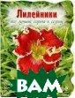 Лилейники. Все  лучшие сорта к  сезону А. Е. Ру бинина Лилейник  - один из самы х красивых и са мых выносливых  многолетников.  Садовые дизайне ры особенно цен