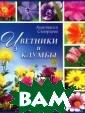 Цветники и клум бы Анастасия Ск ворцова 96 с.<p >Для многих сад оводов, особенн о начинающих, с оздание цветник ов и клумб каже тся сложной и н евыполнимой зад
