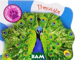 Купить Птицы (изд. 2016 г. ), Проф-Пресс, И. А. Ищук, Н. Е. Шелюх, 978-5-378-25648-8