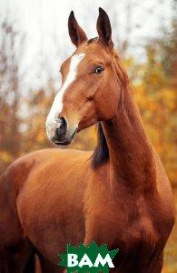 Купить Удивленная лошадь. Блокнот, 978-5-04-090719-9